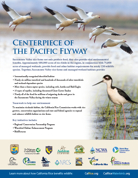 centerpiece-of-the-pacific-flyway